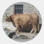 Retrato escocés del ganado de la montaña pegatina redonda
