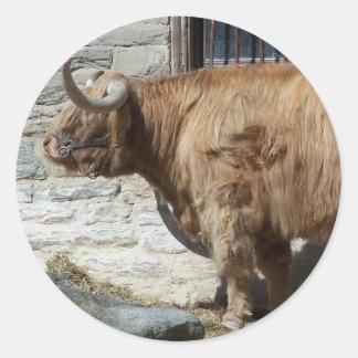 Retrato escocés del ganado de la montaña etiqueta redonda