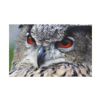 Retrato eurasiático hermoso del Eagle-Búho Lienzo Envuelto Para Galerias