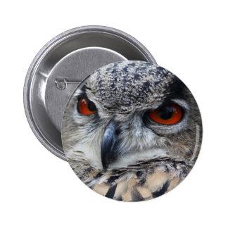 Retrato eurasiático hermoso del Eagle-Búho Pin