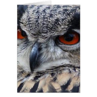 Retrato eurasiático hermoso del Eagle-Búho Tarjetas