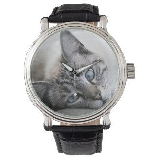 Retrato europeo del gato reloj
