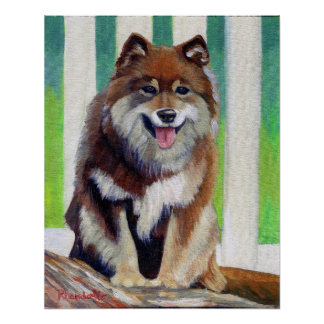 Retrato finlandés del perro de Lapphund Póster