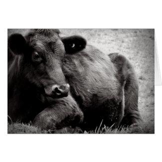 Retrato fotográfico del buey de la carne de vaca d felicitaciones