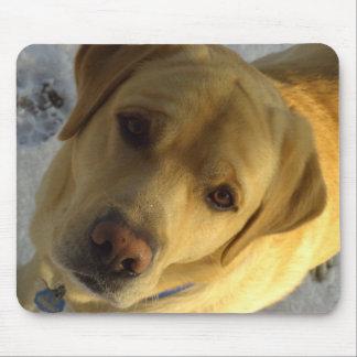 Retrato frontal de la cara de Labrador en nieve Tapete De Raton
