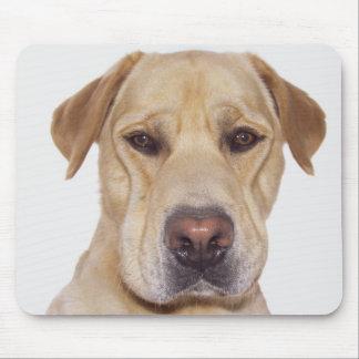 Retrato frontal serio de la cara de Labrador Mousepads