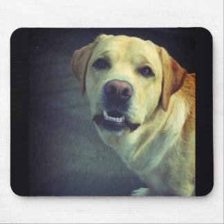 Retrato frontal torpe de la cara de Labrador Alfombrillas De Ratones