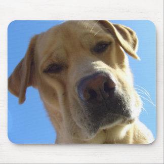 Retrato frontal torpe de la cara de Labrador Mousepad