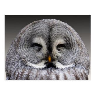 Retrato gris lindo del búho postal