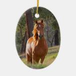 Retrato hermoso de la foto del caballo de la casta adorno de reyes