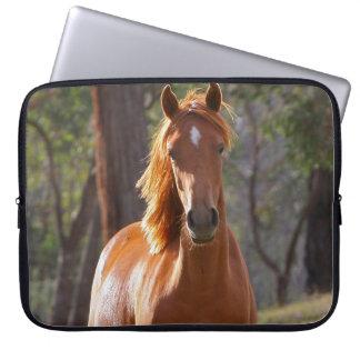 Retrato hermoso de la foto del caballo de la casta manga computadora