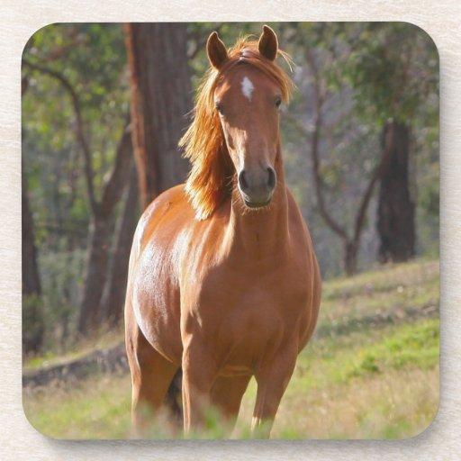 Retrato hermoso de la foto del caballo del chesnut posavasos de bebida
