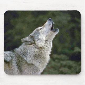 Retrato hermoso de la foto del lobo gris del grito tapetes de raton