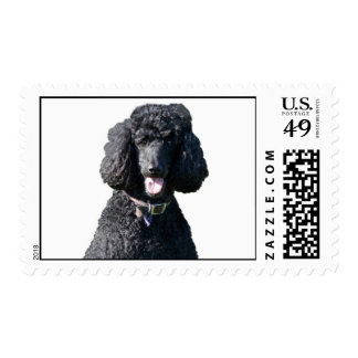 Retrato hermoso de la foto del negro del perro de