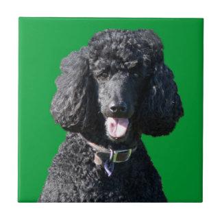 Retrato hermoso de la foto del negro del perro de tejas  ceramicas