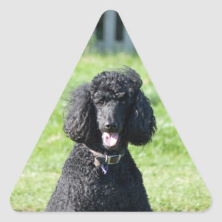 Retrato hermoso de la foto del negro del perro de pegatina triangular