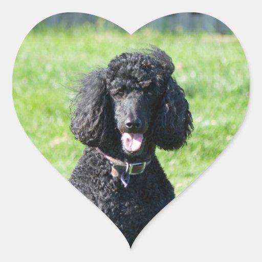 Retrato hermoso de la foto del negro del perro de pegatina en forma de corazón