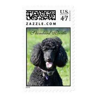 Retrato hermoso de la foto del negro del perro de sellos