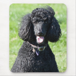 Retrato hermoso de la foto del negro del perro de  tapete de ratón