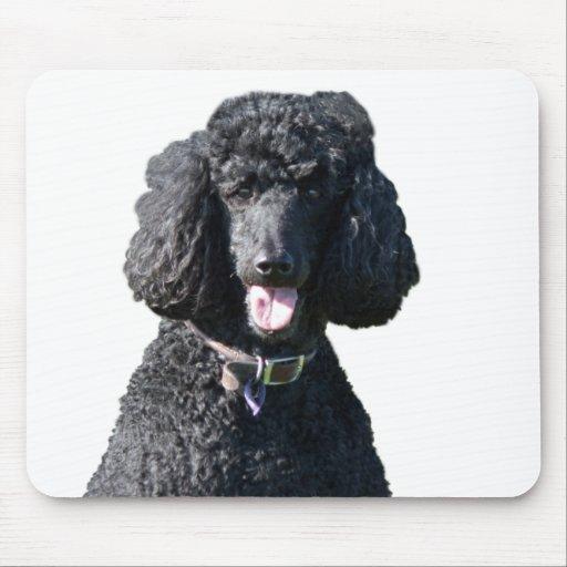 Retrato hermoso de la foto del negro del perro de  tapete de ratones