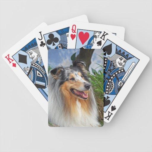 Retrato hermoso de la foto del perro áspero del co baraja de cartas