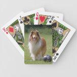 Retrato hermoso de la foto del perro áspero del co baraja