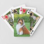 Retrato hermoso de la foto del perro áspero del co barajas
