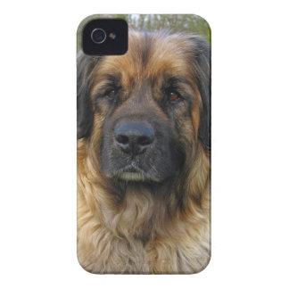 Retrato hermoso de la foto del perro de Case-Mate iPhone 4 fundas