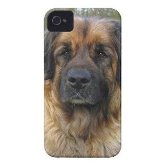 Retrato hermoso de la foto del perro de Case-Mate iPhone 4 coberturas