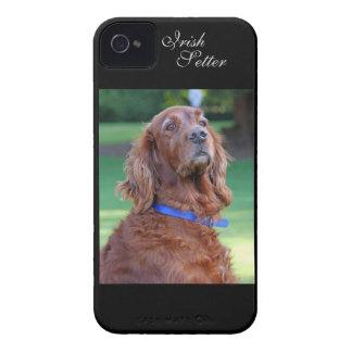 Retrato hermoso de la foto del perro de Irish iPhone 4 Case-Mate Carcasas