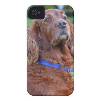Retrato hermoso de la foto del perro de Irish iPhone 4 Case-Mate Funda