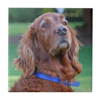 Retrato hermoso de la foto del perro de Irish Sett Azulejo Ceramica
