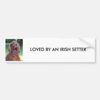 Retrato hermoso de la foto del perro de Irish Sett Pegatina Para Auto
