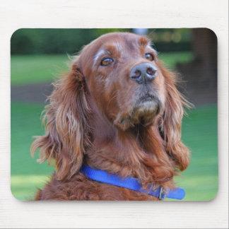 Retrato hermoso de la foto del perro de Irish Sett Alfombrilla De Ratón