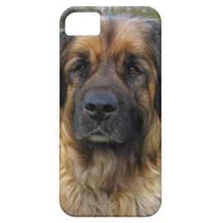 Retrato hermoso de la foto del perro de Leonberger iPhone 5 Case-Mate Cárcasas