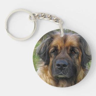 Retrato hermoso de la foto del perro de Leonberger Llaveros