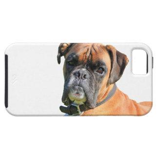 Retrato hermoso de la foto del perro del boxeador iPhone 5 cárcasa
