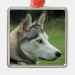 Retrato hermoso de la foto del perro fornido, rega ornatos