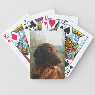 Retrato hermoso de la foto del perro revestido pla barajas de cartas