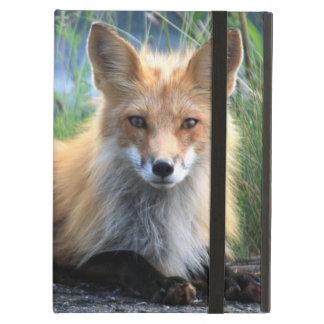 Retrato hermoso de la foto del zorro rojo, regalo