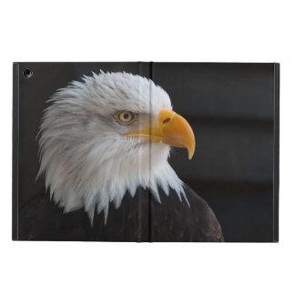 Retrato hermoso del águila calva
