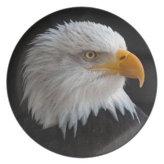 Retrato hermoso del águila calva plato