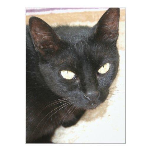 """Retrato hermoso del gato negro invitación 5.5"""" x 7.5"""""""