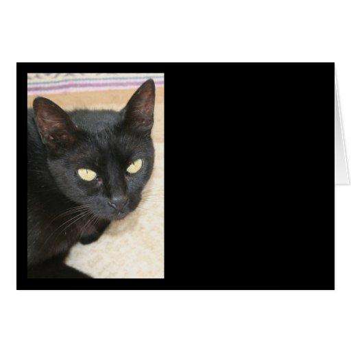 Retrato hermoso del gato negro tarjeta de felicitación