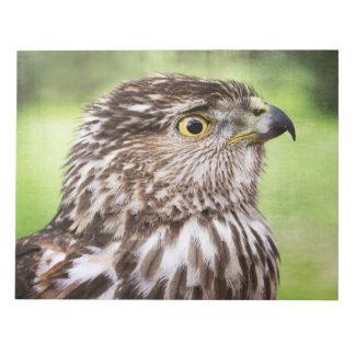Retrato hermoso del halcón blocs