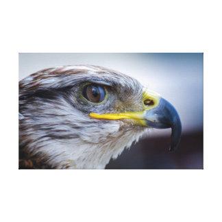 Retrato hermoso del halcón impresiones en lienzo estiradas