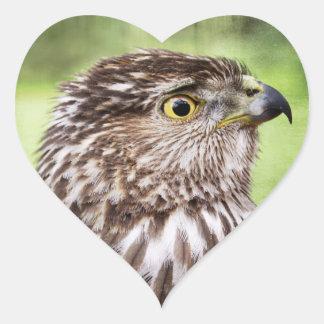 Retrato hermoso del halcón pegatina en forma de corazón