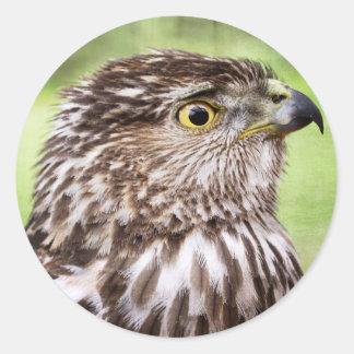 Retrato hermoso del halcón pegatina redonda