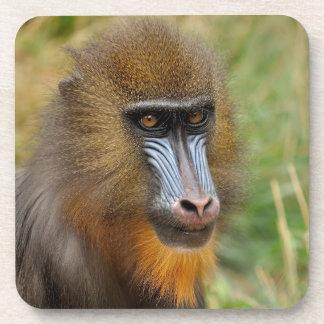 Retrato hermoso del mandrill posavasos