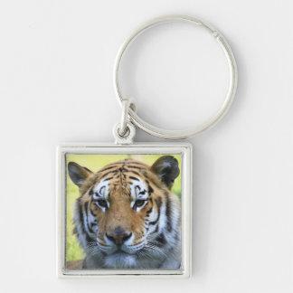 Retrato hermoso del tigre llavero cuadrado plateado